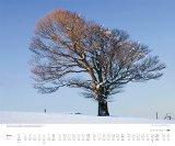 Kalenderverlag, Dumont - Bäume 2017 bestellen