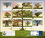 Wohler, Heinz - Vom Zauber alter Bäume 2019 bestellen