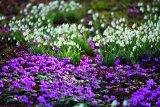 Nichols, Clive - Paradiesische Gärten bestellen
