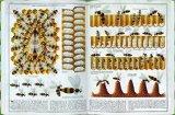 Socha, Piotr - Bienen bestellen